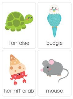 """Our set of printable """"My Pets Flash Cards"""" are a great learning tool for early literacy and would be a great addition to a health unit. All brightly coloured and of high quality. There are 14 brightly coloured, high quality printable flash cards in this pack containing common pets such as guinea pig, cat, mouse, hamster etc."""