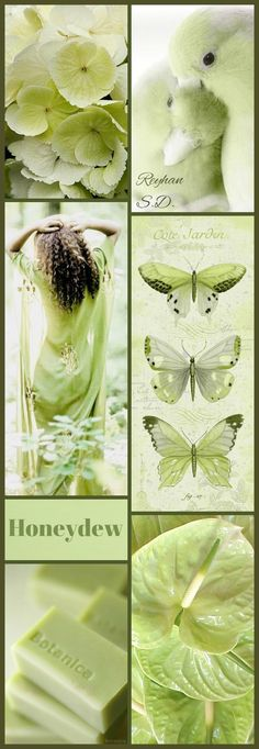 '' Honeydew Green '' by Reyhan S. Living Colors, Mood Colors, Green Colors, Colours, Color Trends, Color Combos, Paint Color Schemes, Color Collage, Color Me Beautiful