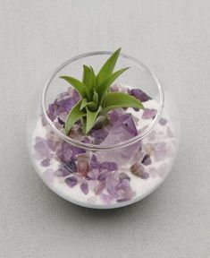 Gemstone Healing Crystal Terrarium This charming little terrarium combines the healing vibes of plants with the unique properties of amethyst. Amethyst is a stone that encourages spiritual growth, wisdom, and tranquility. Because of the stone's ability to Air Plant Terrarium, Garden Terrarium, Glass Terrarium, Succulents Garden, Crystal Terrarium Diy, Orchid Terrarium, Terrarium Centerpiece, Terrarium Wedding, Air Plants