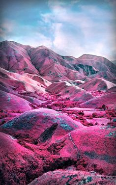 Photographer : Richard Mosse, Tiger Mountain, North Kivu, Eastern Congo, 2011