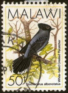 Malawi 1988 - La Elminia Coliblanca es una especie de ave en la familia Stenostiridae. Posee una distribución discontinua en el este de África