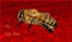 A million Killer Bees attacked me without warning and I almost lost my life. Read this thrilling true life story. Somehow I Manage, My Autobiography, Small Bees, Family Feud, Natural Honey, Life