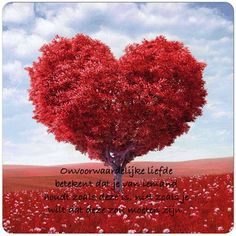 Onvoorwaardelijke liefde betekent dat je van iemand houdt zoals deze is, niet zoals je wilt dat deze zou moeten zijn #love #liefde #loving #always
