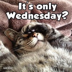 Weekend Quotes : It's only Wednesday - Quotes Sayings Funny Hump Day Memes, Funny Wednesday Quotes, Wednesday Morning Quotes, Hump Day Quotes, Hump Day Humor, Wednesday Humor, Morning Humor, Funny Quotes, Humor Quotes