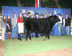national western stock show 2013 - Google Search