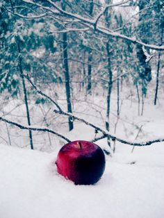 The apple lie there, looking very suspicious, but Snow was so hungry...