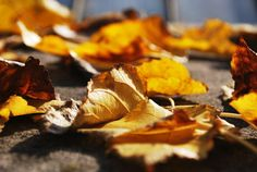 Celebrate Fall with steep discounts on all of my video courses! Offer good thru September 30, 2015 only