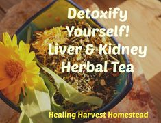 Ever since I began using herbs every day for tonic and acute purposes, I  have seen such a great change in my health! If you ask people what is the  most important organ in the body, many will immediately proclaim it's the  heart! Or the brain! The liver and kidneys, though, are often overlooked