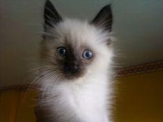 snoezie: 2 months old