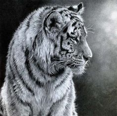 julie rhodes, Julie Rhodes - wildlife pencil artist, wildlife art, animal drawings, snow leopards, art, wildlife drawings, tigers, lions, big cats, drawing animals, galleries, wildlife art gallery, wildlife art prints Realistic Pencil Drawings, Pencil Drawings Of Animals, Amazing Drawings, Art Drawings, Tiger Cub, Wildlife Art, Pencil Art, Big Cats Art, Cat Art