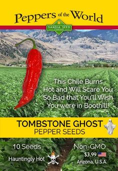 This Tombstone Ghost Pepper burns so hot and scares you so bad you'll wish you were in Boothill! The heat is far more than you would expect. It keeps creeping up on you until shivers go down your spine and your face goes numb. Not even whiskey will save you! It has been said that when people survive the heat of this Outlaw Pepper they become Tombstone Legends!