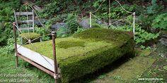 Moss carpets. Bryophyta.ca