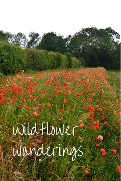 A visit to Naturescape wildflower farm where you can wander amongst the fields and experience the interaction between native wildflowers and local wildlife.