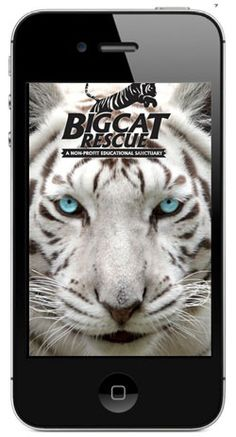 Big Cat Rescue is the largest accredited sanctuary in the world dedicated entirely to abused and abandoned big cats.