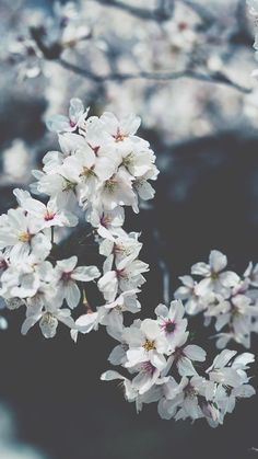 54 Ideas Flowers Wallpaper Iphone Spring Cherry Blossoms For 2019 Frühling Wallpaper, Flowers Background, Flower Background Wallpaper, Spring Wallpaper, Nature Wallpaper, Wallpaper Backgrounds, Spring Backgrounds, Backgrounds Free, Background Ideas