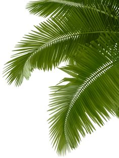 Zip Orlando - Florida's #1 zipline canopy tour! Check out the 'Sunday Sunset' tour!