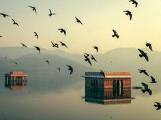 A Flock of Pigeons Burst into the Sky... photo by Mahesh Balasubramanian