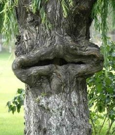 odd trees of nature - Google Search