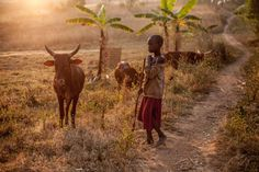 La falta de terrenos para cultivar empuja a los pigmeos a la extrema pobreza…