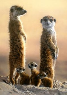 Michael Tancrel – Sharon Tancrel and Nicola Tancrel - Cutest Baby Animals Cutest Animals On Earth, Animals Of The World, Cute Baby Animals, Funny Animals, Nature Animals, Animals And Pets, Vida Natural, South African Artists, Tier Fotos