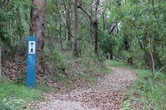 Bush walk, spot a koala, get in shape, and have fun with your kids at Burleigh Ridge Park, one of the Gold Coasts secrets. Australia Travel, Gold Coast, Walks