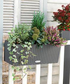 jardiniere aux vivaces pour balcons et terrasses