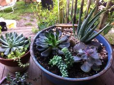 { succulents, etc }