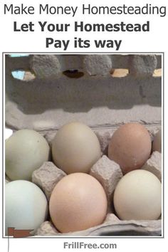 Find your perfect solution to being homebound... Day Old Chicks, Eggs For Sale, Horse Manure, Large Rabbits, Fish Feed, How To Cook Eggs, I Survived, No Frills, Homesteading
