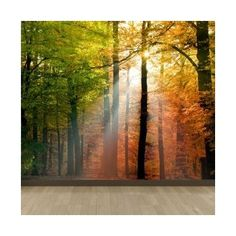 Brewster Home Fashions Komar Autumn Forest Wall Mural Reviews
