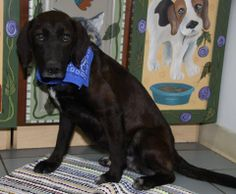 URGENT! IN SHELTER SINCE FEBRUARY 2013! Winter - Lab. Ohio Valley HS - Marietta, OH. Seriously a sweet girl like Winter has not been adopted in over a year?? I say it is definitely her time to have a home and loving family! Let's do this today people!! She was an owner surrender. She has a sweet disposition and loves attention!  https://www.facebook.com/rescuemeohio.org/photos/a.429945420382970.99748.312505432126970/743921488985360/?type=1&theater