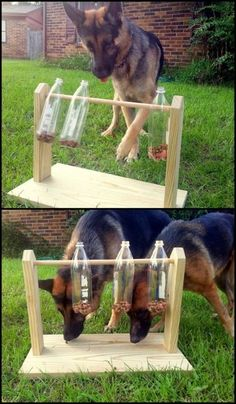 Keep your furry friends busy and entertained with this spinning plastic bottles dog treat game. Do you need one for your pets? - My Doggy Is Delightful Pet Dogs, Dogs And Puppies, Pets, Outdoor Dog Toys, Outdoor Dog Area, Dog Enrichment, Dog Playground, Playground Design, Diy Dog Toys