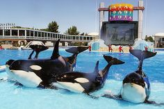 Legislation sent to Gov. Jerry Brown also prohibits the export of killer whales.