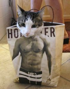 Cat Hollister model with Abs
