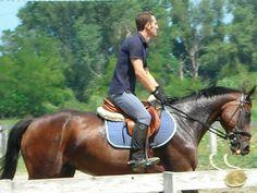 http://www.equirodi.it/annunci/cavalli-in-vendita/purosangue.htm  cavalla purosangue di 16 anni ha fatto corse in piano e salto ostacoli. adatta come fattrice e per passeggiate