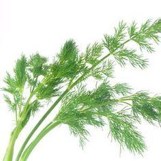 Organic Greek dill seeds heirloom non gmo by Magicgreekgarden, €0.80