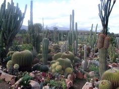 South African cacti garden western cape