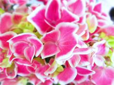 Hydrangeas given to me by a wonderful friend at Easter.