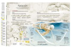 Beautiful illustration in this swimming #infographic by Alberto Lucas López and Josemi Benítez