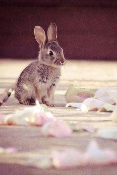 happy bunny ~ rabbit .. X ღɱɧღ   