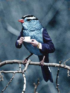 This bird show how it also loves #tea. #DarjeelingTea