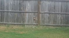 Neighbors dog created hole in the fence. Somebody here is obviously a peeping tom!