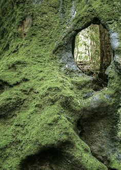 photo art of fairy portals and elfish doorways to fantasy worlds .