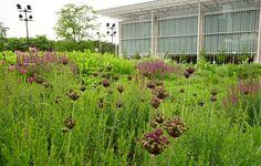 Piet Oudolf's Lurie Garden, UK