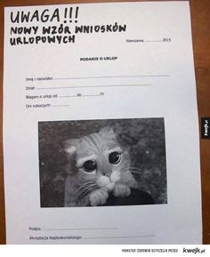 Nowy wzór wniosków urlopowych Scary Funny, Wtf Funny, Funny Cats, Funny Animals, Funny Memes, Animals And Pets, Funny Lyrics, Weekend Humor, Old Memes