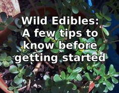 Wild Edibles: Getting Started