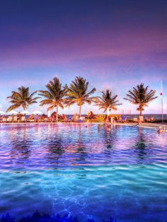 Colorful and Distinctive Stock Photos for all your Creative Needs. We just hope you will love them as much as we do. Tropical Pool, Beautiful Images, Palm Trees, Awesome, Amazing, Royalty Free Stock Photos, Colorful, Creative, Outdoor Decor