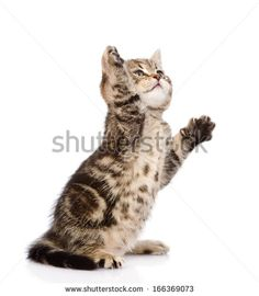Kittens Stock Photos, Images, & Pictures | Shutterstock