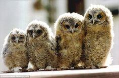 Owls  Pinned by www.myowlbarn.com