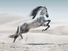 Printed with fade-resistant ink on tempered glass, the White Stallion Photography Glass Wall Art captures a gorgeous grey horse in a majestic stride. This breathtaking piece will make a bold statement in any room of your home. All The Pretty Horses, Beautiful Horses, Animals Beautiful, Animals And Pets, Cute Animals, Funny Animals, Horses And Dogs, Animals Photos, Black Horses