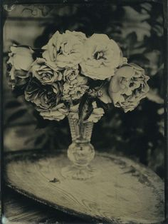 "Gwen Wilkinson - ""Rosa"" - Wet plate collodion"